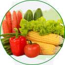 昆山食堂蔬菜配送
