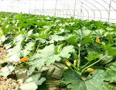 昆山蔬菜配送基地